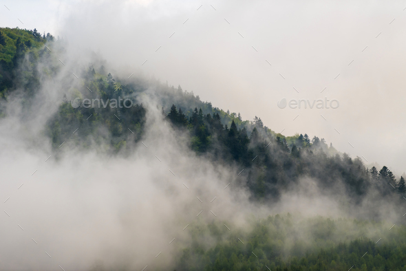 View of mountain forests covering by fog - Stock Photo - Images