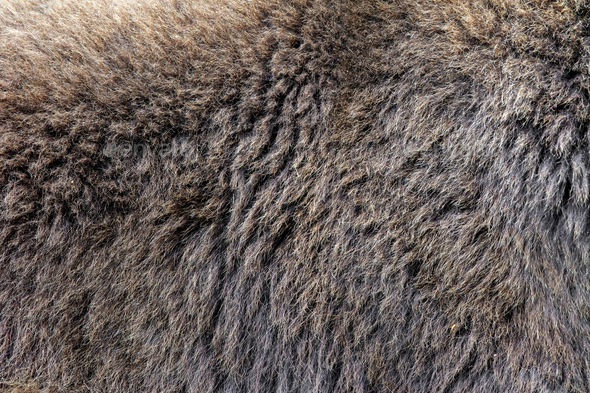 Real texture of brown bear fur - Stock Photo - Images