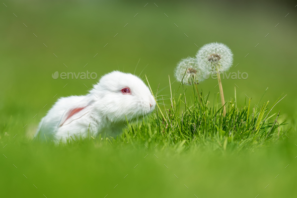 Baby white rabbit in grass - Stock Photo - Images