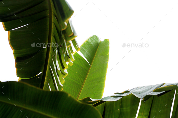 leaves at sky - Stock Photo - Images