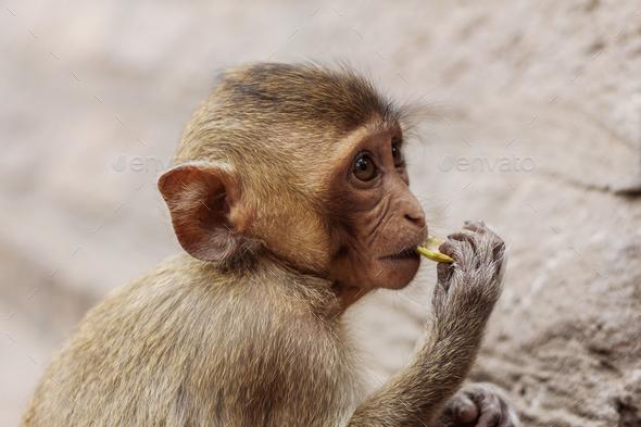 monkey are eating - Stock Photo - Images