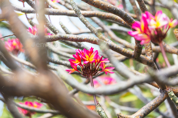 Tropical flowers - Stock Photo - Images