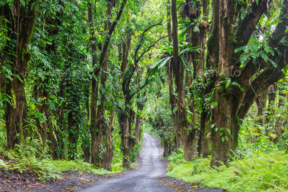 Road in jungle - Stock Photo - Images