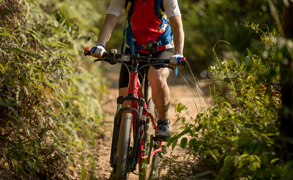 Mountain biking in the forest - Stock Photo - Images
