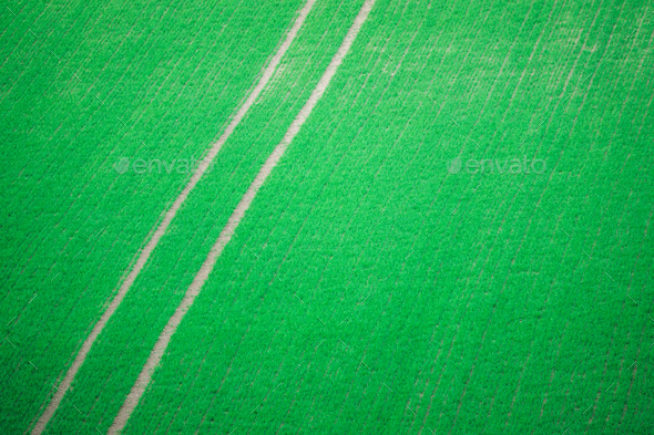 Tractor Tracks Through Crops - Stock Photo - Images