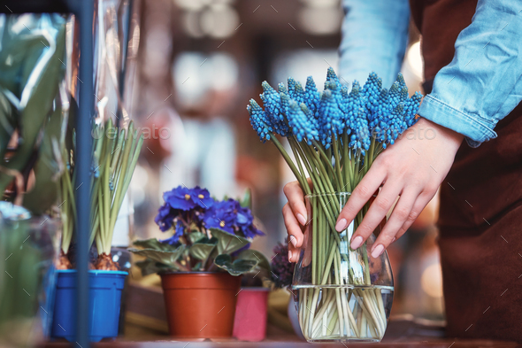 Female hands with muscari - Stock Photo - Images