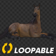Horse - Bay - Laying Loop - VideoHive Item for Sale