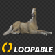 Horse - Palomino - Laying Loop - VideoHive Item for Sale