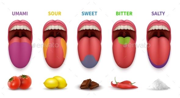 Human Tongue Basic Taste Areas - Miscellaneous Vectors