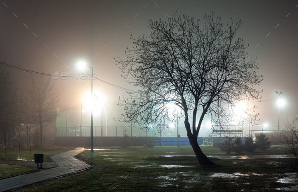 Silhouette of a tree without foliage against a background of fog in an urban park - Stock Photo - Images