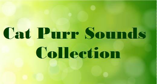 Cat Purr Sounds