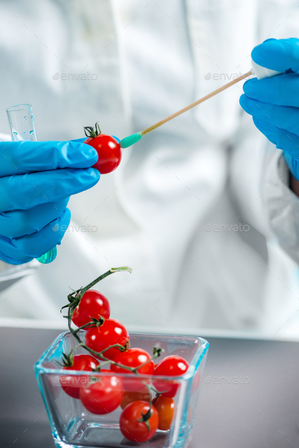 Biologist analyzing cherry tomato for pesticides - Stock Photo - Images