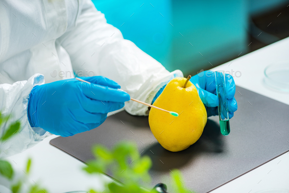 Biologist examining apple quince for pesticides - Stock Photo - Images