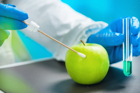 Biologist examining apple for pesticides - Stock Photo - Images