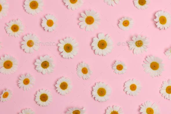 daisies collection - Stock Photo - Images