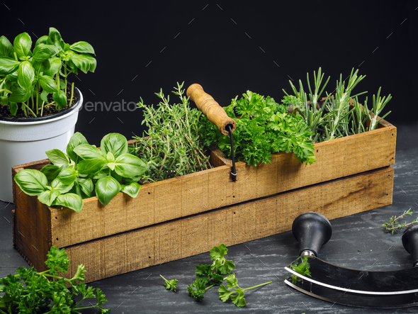 Herbs in old wood box - Stock Photo - Images