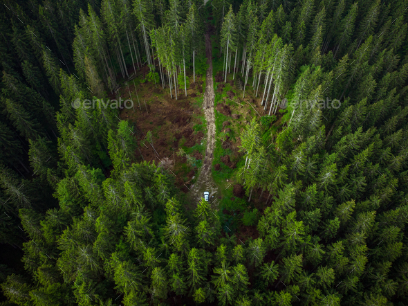 Off road car adventure on forest road, drone view - Stock Photo - Images