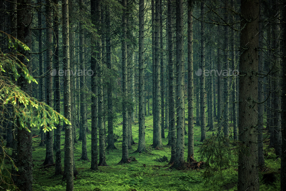 Moody image of magical forest in Slovenia - Stock Photo - Images