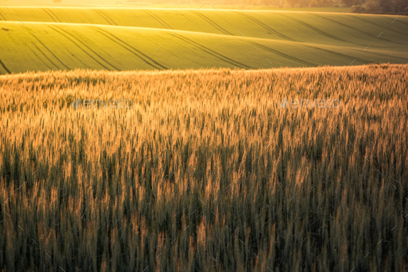 Sunrise over rolling hills in Czech Moravia region at summer - Stock Photo - Images