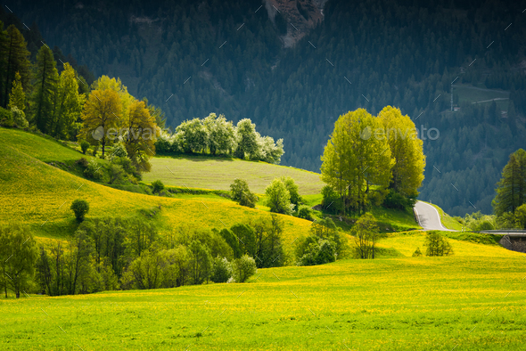 Vibrant green summer trees and flowering meadow in Switzerland A - Stock Photo - Images