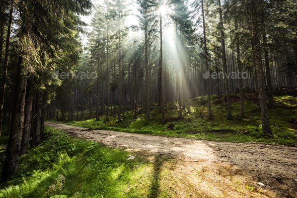 Sun rays between trees in forest, off road adventure - Stock Photo - Images