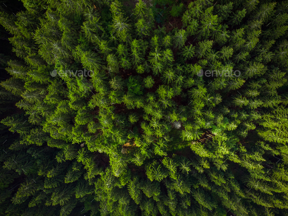 Green forest birds eye view, drone photo - Stock Photo - Images