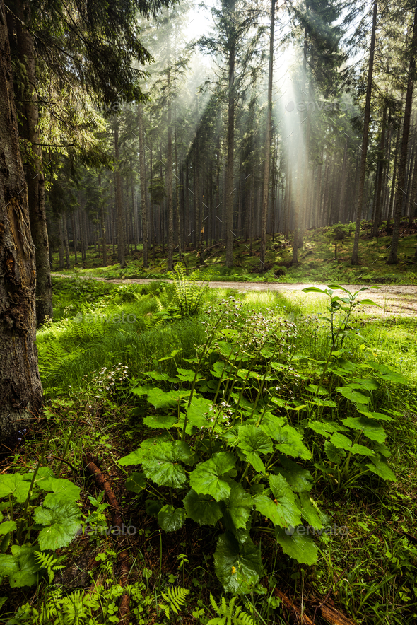 Mistyc and magical light in forest or woodland - Stock Photo - Images