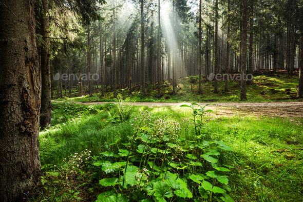 Sun rays cut trough mist in forest or woodland - Stock Photo - Images