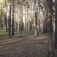 Coniferous Forest in Siberia - VideoHive Item for Sale