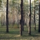 Summer Coniferous Forest - VideoHive Item for Sale