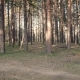 Trails in the Forest - VideoHive Item for Sale