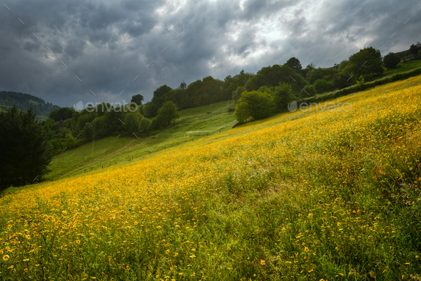 Cloudy and rainy day over the flower-covered meadows - Stock Photo - Images