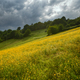 Cloudy and rainy day over the flower-covered meadows - PhotoDune Item for Sale