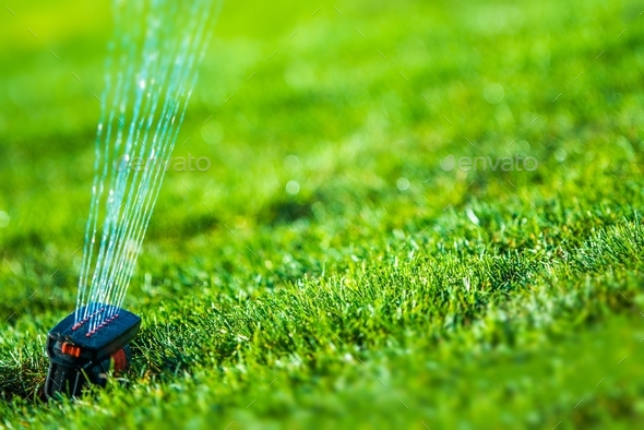 Garden Grass Sprinkler - Stock Photo - Images