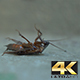 Roach Portrait Dying - VideoHive Item for Sale