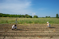 Woman farmer planting young tomatoes plants - PhotoDune Item for Sale
