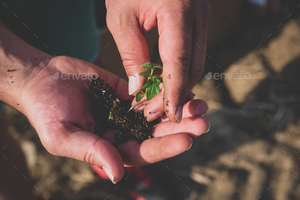 Hands holding soil and plant - Stock Photo - Images