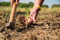 Man's hand touching young tomato plant. - PhotoDune Item for Sale