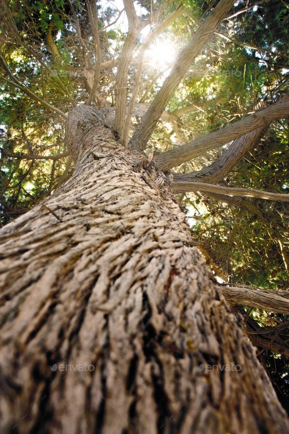 Tree bark - Stock Photo - Images