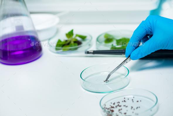 Examining seeds - Stock Photo - Images