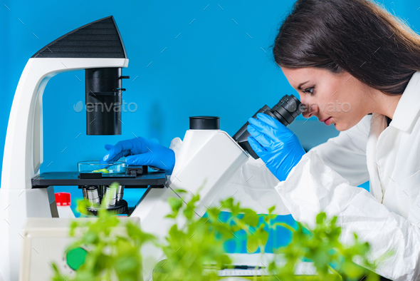 Examining plant tissue with microscope - Stock Photo - Images