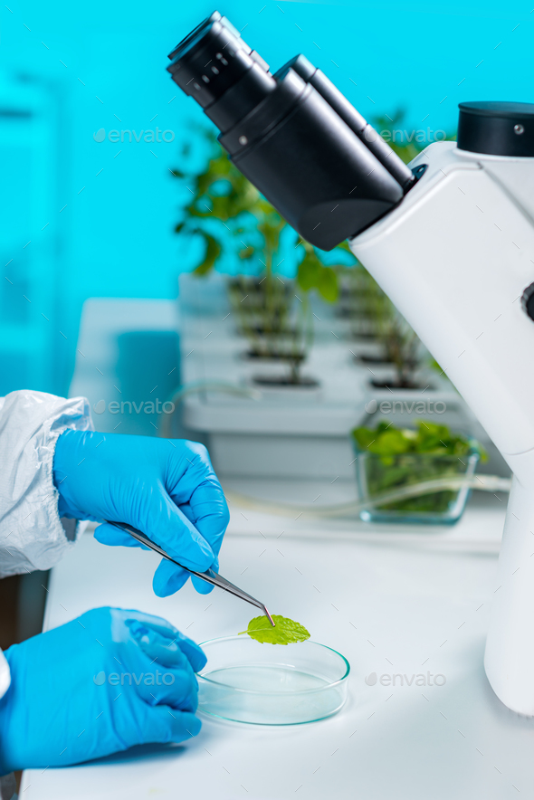 Plant laboratory. Biology technician working with plants - Stock Photo - Images