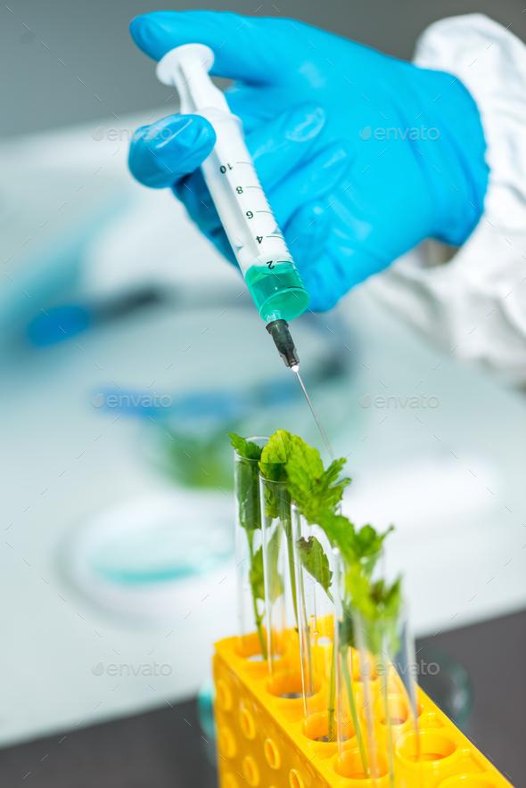 Biologist Examining Plant Seedling - Stock Photo - Images