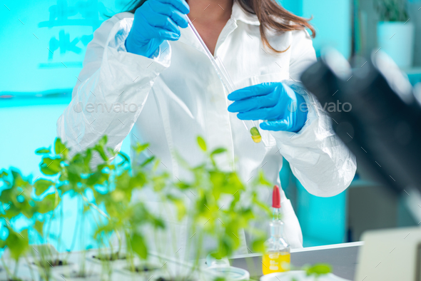 Biologist doing experiments with plants - Stock Photo - Images