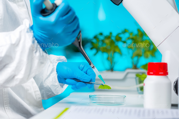 Plant genetics - Stock Photo - Images