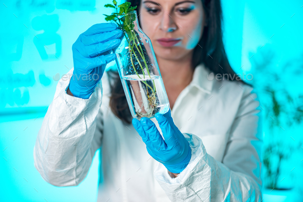 Biologist Examining Plant Roots - Stock Photo - Images