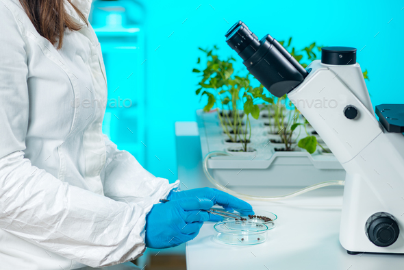 Examining seeds - Stock Photo - Images
