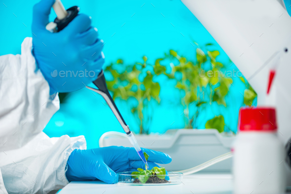 Biologist doing experiments with plant root - Stock Photo - Images