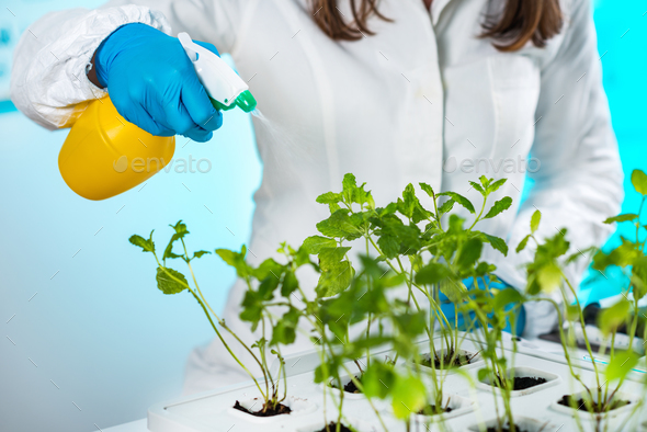 Lab Technician Spraying Plants - Stock Photo - Images