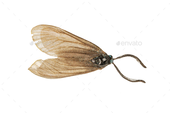 Brown moth on a white background - Stock Photo - Images